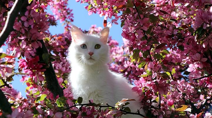 Helsinki Üniversitesi'ne 'Van kedisi' tepkisi