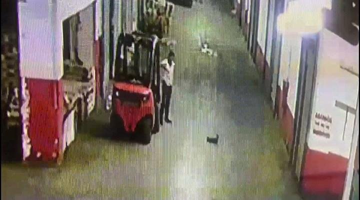 Bayrampaşa'da bir esnaf, yavru kediyi tekmeleyerek öldürdü