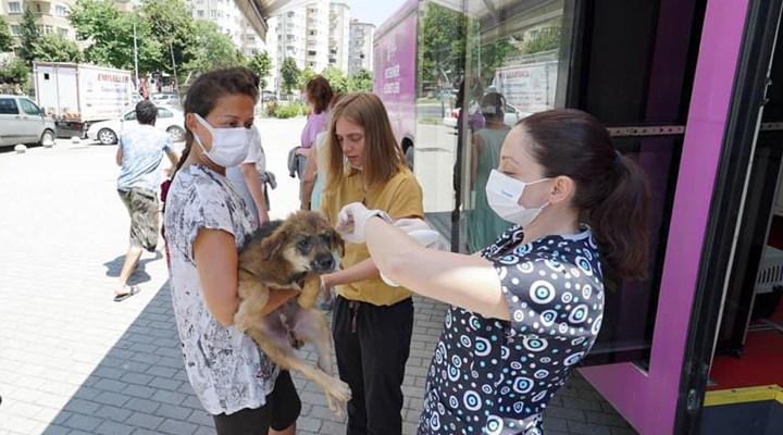 İstanbul'un sokak hayvanları, Vetbüs ile aşılanıp muayene ediliyor