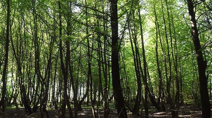 Muğla'da orman bırakmayacaklar