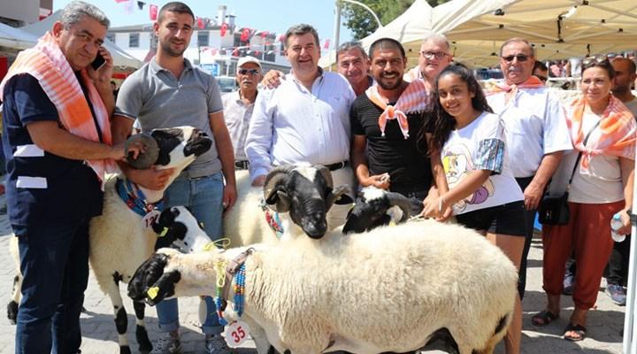 6. Ovacık Tarım ve Sakız Koyunu Festivali başlıyor