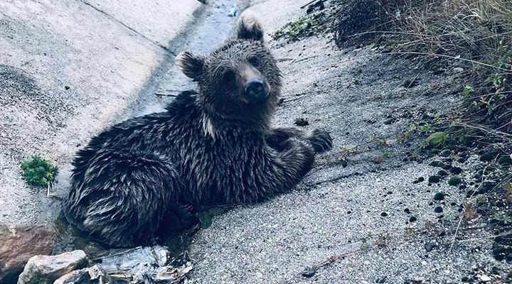 Bolu'da aracın çarptığı yavru ayı yaşamını yitirdi