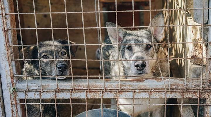 Güney Kore köpek eti tüketimini yasaklamayı planlıyor