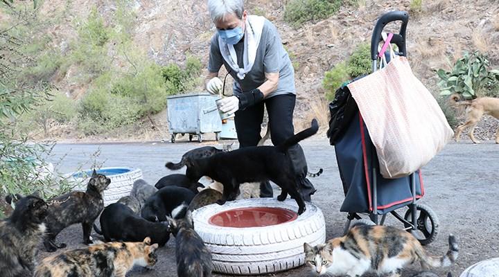 Her gün 200 sokak kedisini elleriyle besliyor: Ömrümü adadım