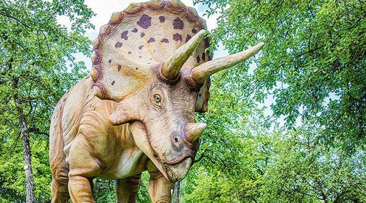 """En büyük boynuzlu dinozor """"Big John""""un kalıntıları 8 milyon dolara satıldı"""
