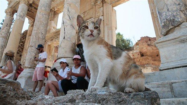 antik-kent-kedilere-yuva-oldu-499048-1.