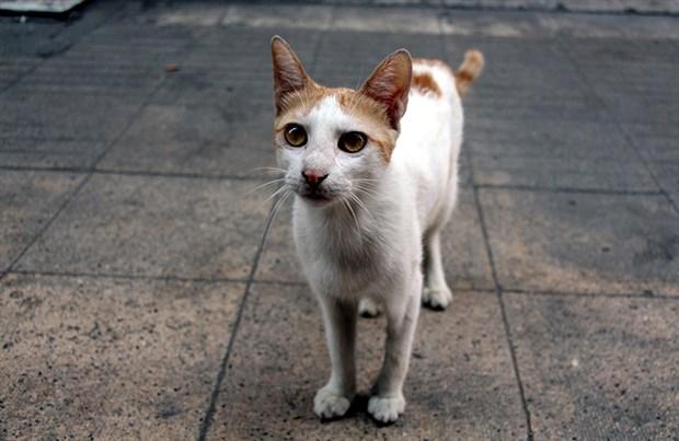 iskence-edilen-kedi-ayse-tedavisinin-ardindan-sokaga-geri-dondu-501660-1.