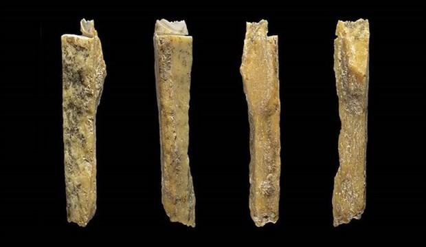 melez-insanin-bulundugu-magarada-yeni-kemikler-bulundu-513305-1.