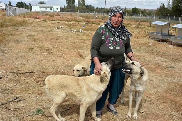 rukiye-bagci-15-yildir-sokak-hayvanlarini-besliyor-517639-1.
