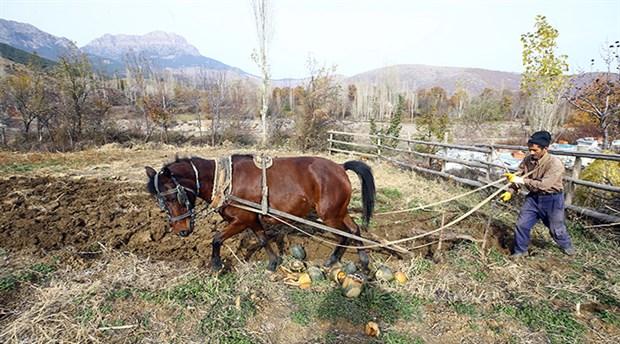 parasizlik-ciftciyi-kara-sabana-muhtac-birakti-535719-1.