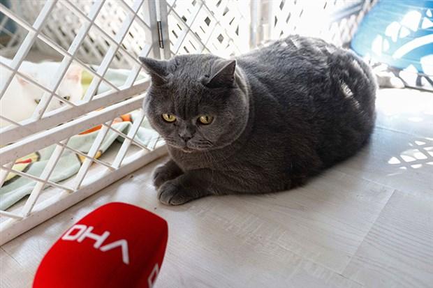 kedi-shanti-iki-bucuk-ayda-4-5-kilo-verdi-626207-1.