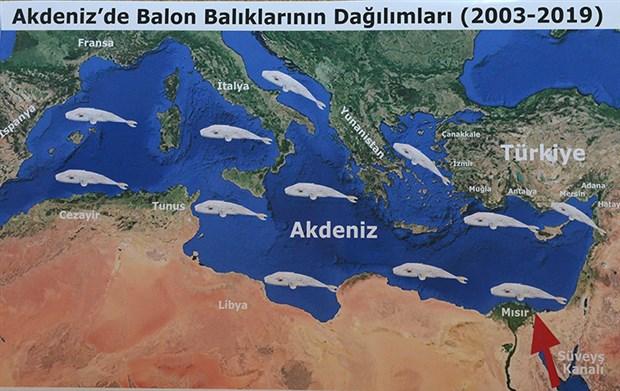 balon-baliginin-zehri-siyanurden-1200-kat-daha-guclu-654863-1.