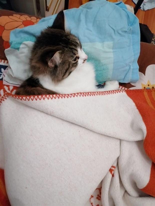 bugun-sevimli-dostlarimizin-gunu-dunya-kedi-gunu-kutlu-olsun-766246-1.