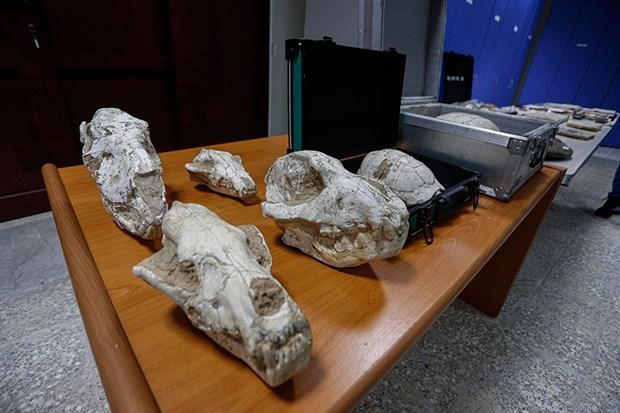 adnan-oktar-in-fosilleri-417-milyon-yillik-cikti-800463-1.