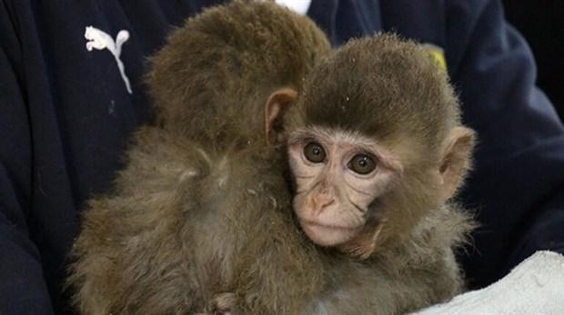 gurbulak-sinir-kapisi-nda-12-yavru-maymun-bulundu-873210-1.