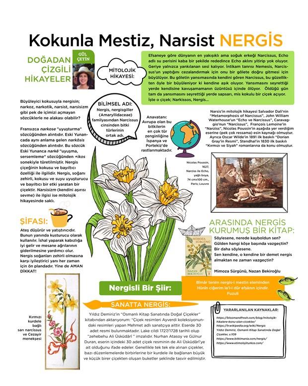 kokunla-mestiz-narsist-nergis-876058-1.