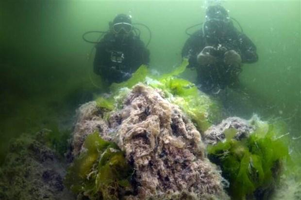 marmara-yi-olu-deniz-haline-getirdi-musilaj-neden-olustu-alinmasi-gereken-onlemler-ne-882944-1.