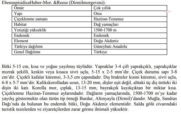 burdur-valiligi-den-salda-raporu-endemik-bitkinin-zarar-gorme-ihtimali-yuksek-884554-1.