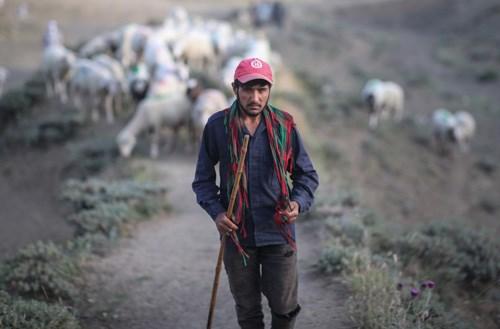 anadolu-nun-afgan-cobanlari-2-tukenen-ciftcinin-hikayesi-afgan-cobandan-ayri-degil-887819-1.