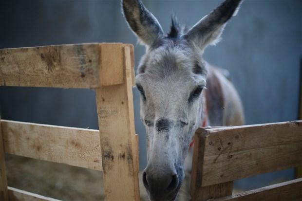 orman-yangininda-yaralanan-hayvanlar-sahra-hastanesinde-tedavi-ediliyor-908095-1.