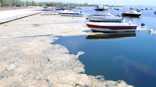 marmara-denizi-nde-yeni-tehlike-oksijen-azligi-922496-1.