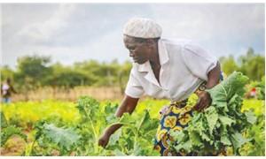Zimbabweli çiftçi Elizabeth Mpofu: Çokuluslu şirketler kırsalı yoksullaştırıyor