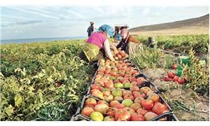 Üretim düştü tarım küçüldü