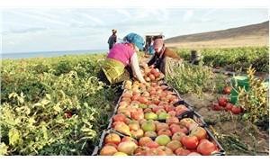 25 yılda ekim alanı yüzde 60 azaldı