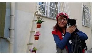 Kedileri soğuktan korumak isteyen kadın, evine 'Kedi Merdiveni' yaptırdı