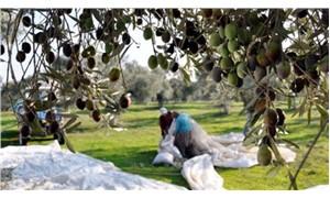 Zeytinlikler torba yasa ile sanayiye açılıyor
