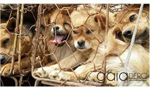 Yulin köpek eti festivali geçici olarak yasaklandı
