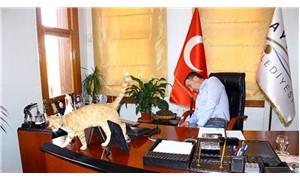 Belediye başkanının sahiplendiği kedi, belediyenin maskotu oldu