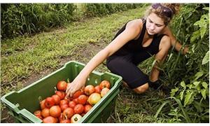 Köylünün çiftçinin kazanması için yerel tohum takas şenlikleri