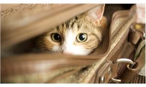Valizde kedilerle yakalanan kişi için 10 yıla kadar hapis istemi