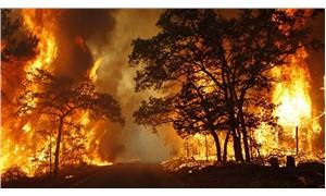 Orman yangınlarını önlemek nasıl mümkün?