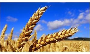 Buğday alım fiyatındaki artış enflasyonun gerisinde