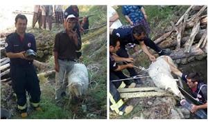 Kuyuya düşen koyun ve kaplumbağa kurtarıldı