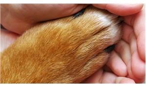Hayvan hakları savunucularından ortak bildiri: Yaşam hakkını savunuyoruz!