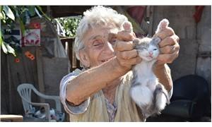 95 yaşındaki hayvansever 25 kediye bakıyor