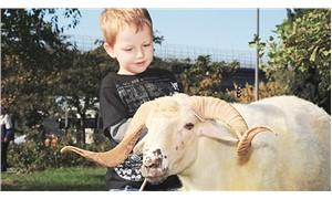 Çocuklarımızı hayvan kesiminden uzak tutalım