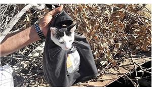 10 metrelik kuyuya düşen kedi kurtarıldı
