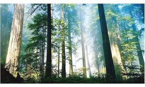 Tropikal yağmur ormanları 'karbon yutağı' olmaktan çıktı