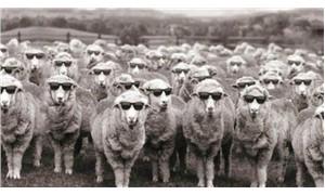 Çobanlar, koyunlar  ve keçiler
