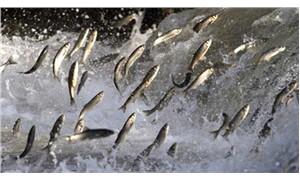 Avrupa Konseyi, Karadeniz için balık avlama kotasını belirledi