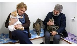 Artvinli çift, kediler için ısı yalıtımlı özel ev yaptırıp bakıcı tuttu
