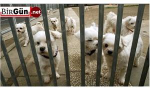 Hayvanları koruma yasa tasarısı yeterli mi?