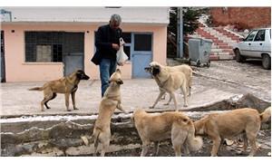 Muhtarlık maaşını sokak hayvanlarına harcıyor