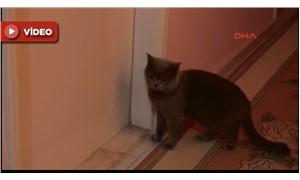 Kedi 'Duman', 6 aydır ölen sahibinin odasının kapısında bekliyor