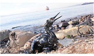 Körfez kirlilikle boğuşuyor Eski haline dönmesi zor