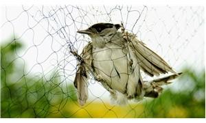 Doğa savunucuları iki küçük kuş için yıllardan beri mücadele veriyor